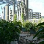 jardin_toit_uqam2