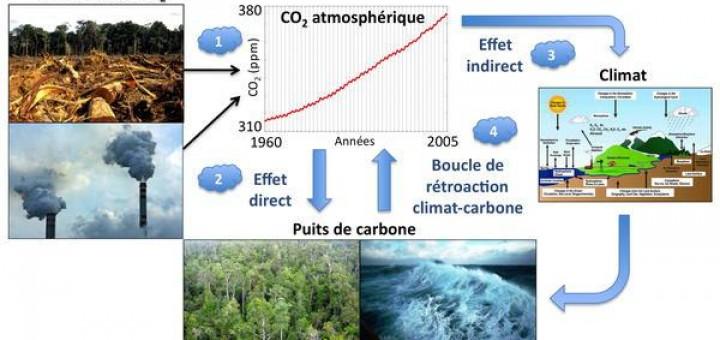 Figure 1 - Boucle de rétroaction climat-carbone